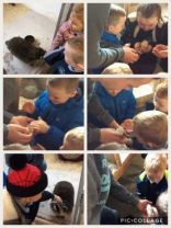 Down on the farm with Y1and2